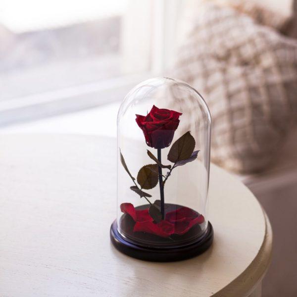 Стабилизированная роза M170